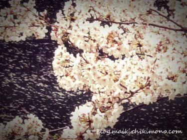桜と帯結び
